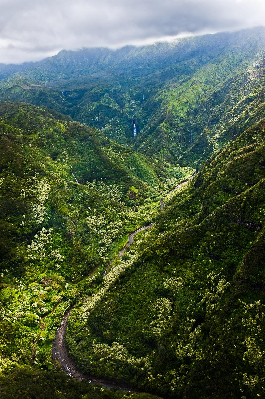 005_Kawai Rainforest.jpg