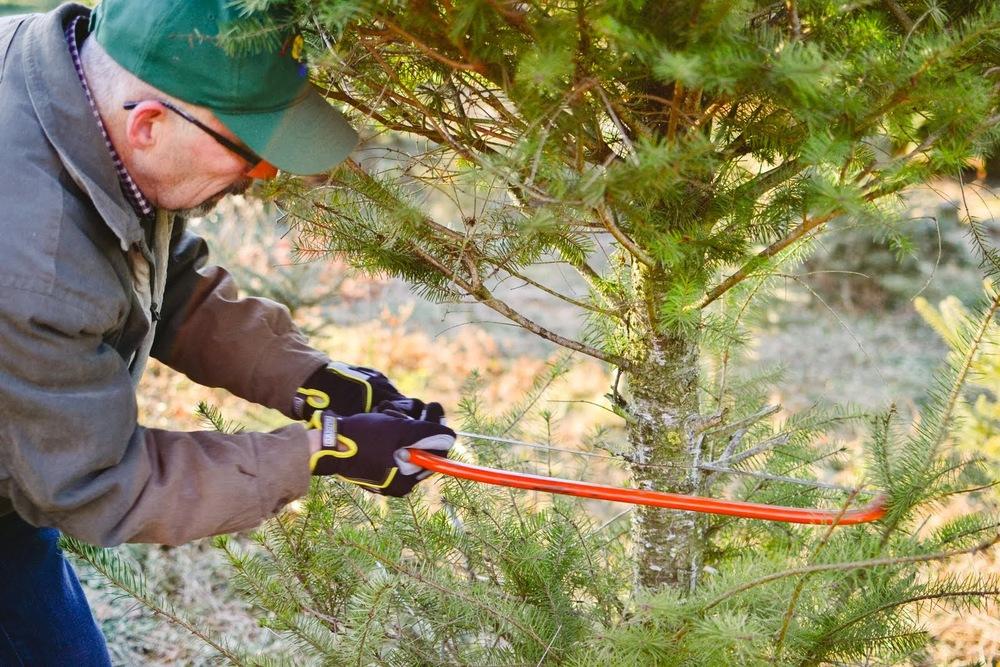 tree+hunting-20.jpg