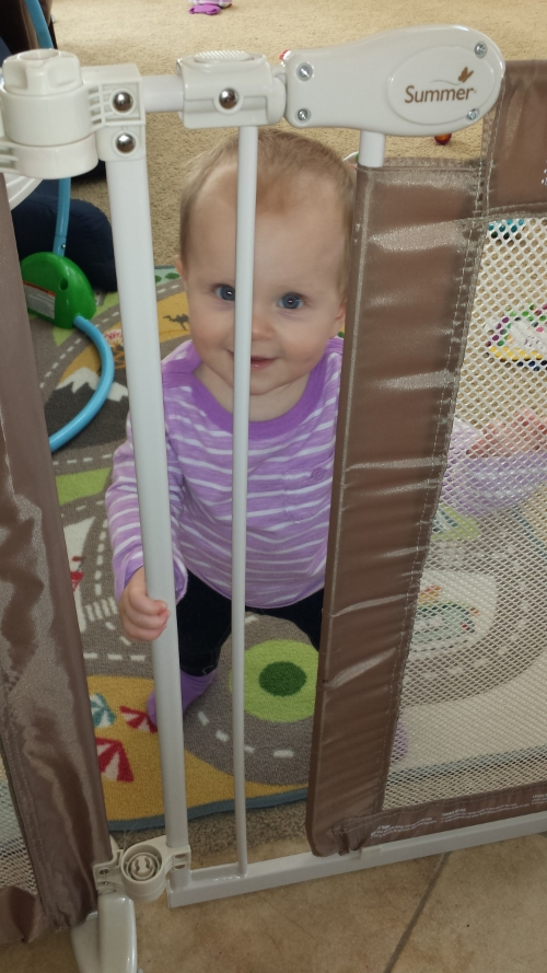 Baby gates are good for one thing: guilt.