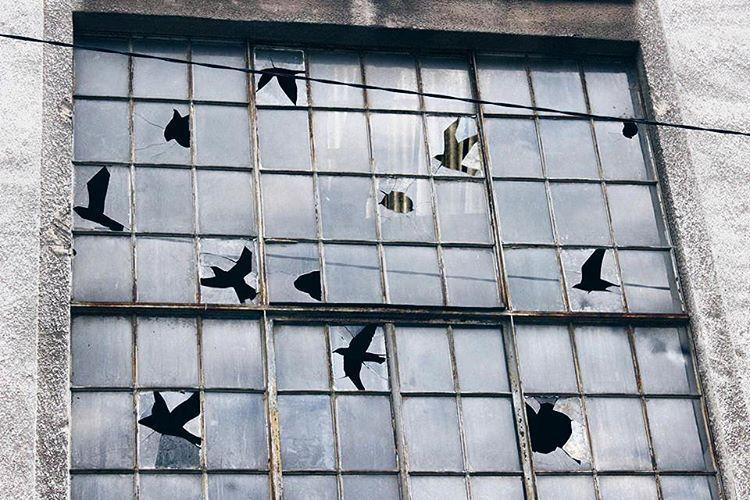 bjornvanpoucke :    Birds appear in the negative space of shattered windows, a striking tribute to René Magritte by @pejac_art! Photo by my good friend @sashabogojev #streetart #window #renémagritte #bird