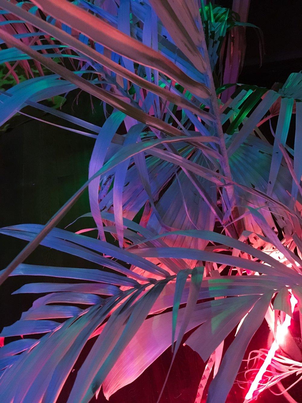 sleazeburger :     Nite Palm
