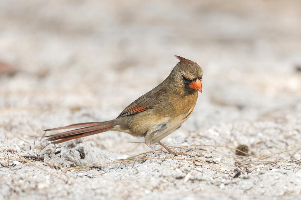 bird personality (1 of 1).jpg