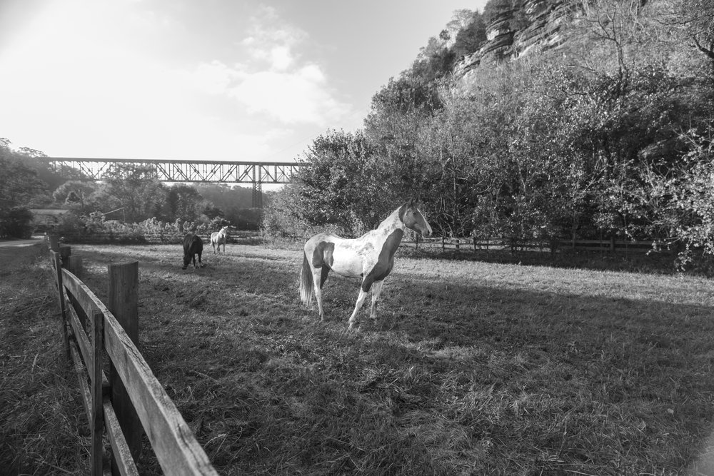 high bridge horse (1 of 1).jpg