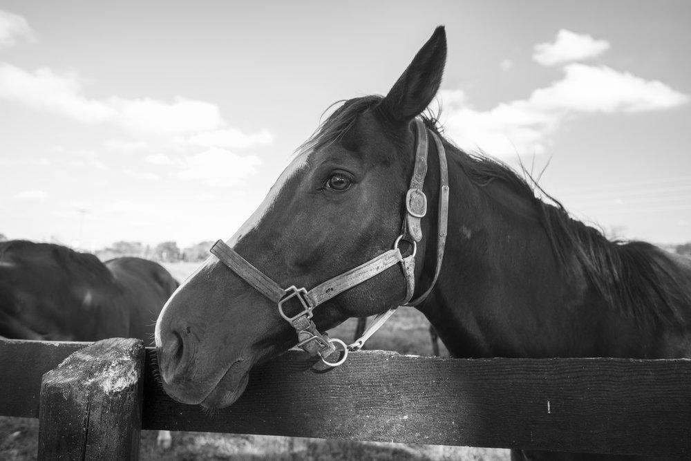 horse port (1 of 1).jpg