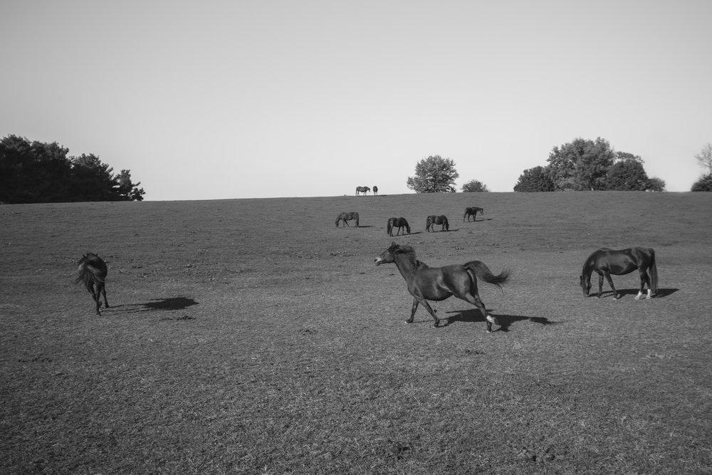 horse run (1 of 1).jpg