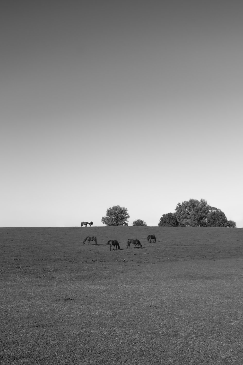 horses vertical (1 of 1).jpg