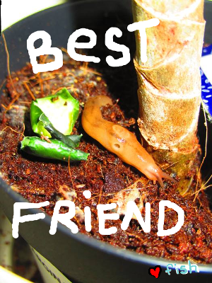 Best Friend Slug - fish17.PNG