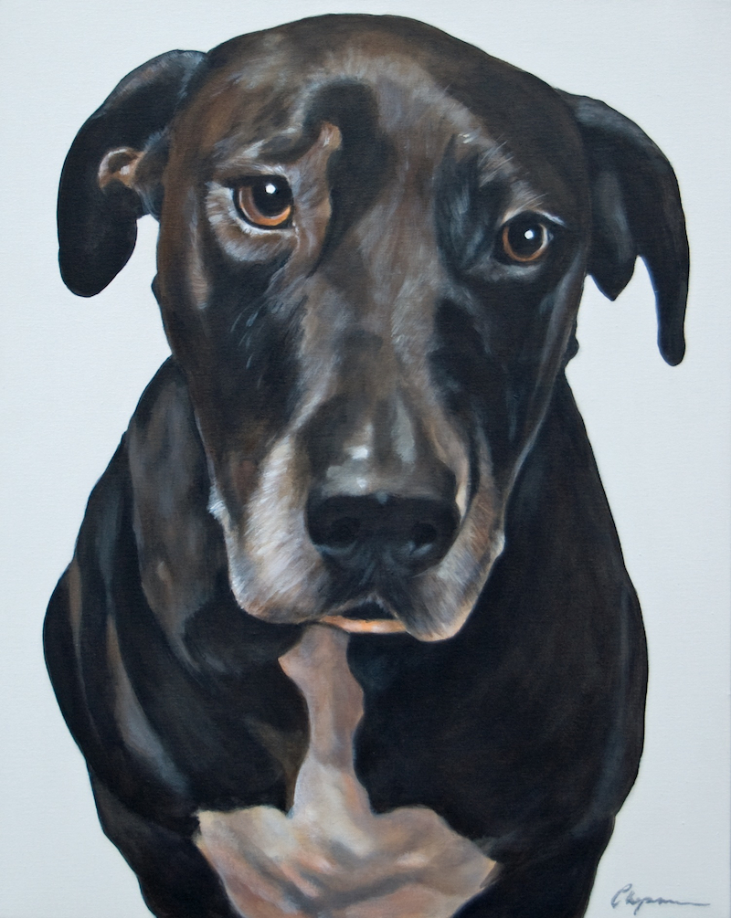 Dog Portrait 2 Xmas 2014 - Debbie Chapman