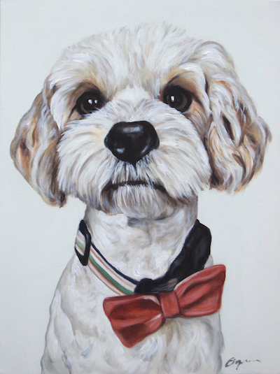 Cavachon Portrait - Dec 2017How could I go wrong with a face like that! I have to admit (not to my own dog of course!) I really fell for this fella. Surprise Christmas present.