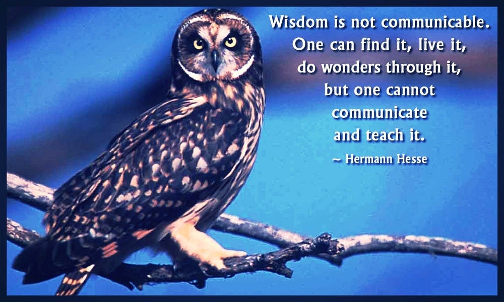 Owl_on_a_branch_beside_a_quote_by_Herman_Hesse