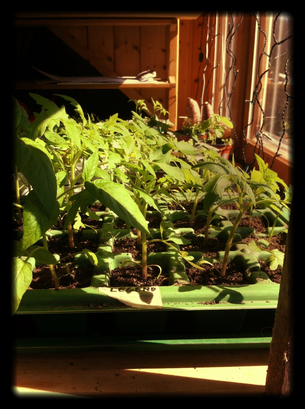 Home_grown_garden_from_seed