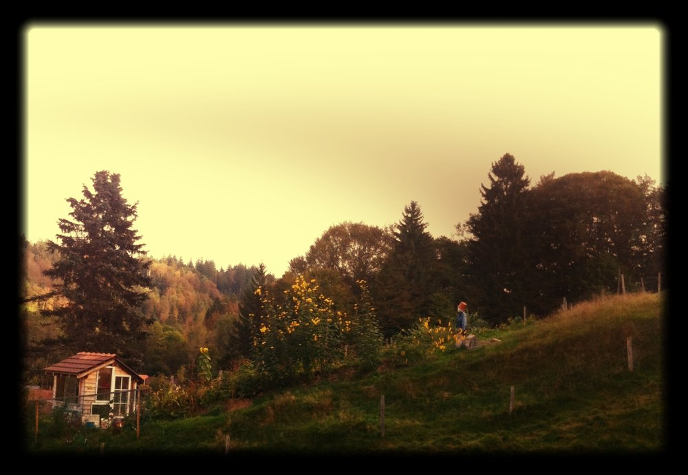 A_Lovely_view_of_our_Permaculture_Garden