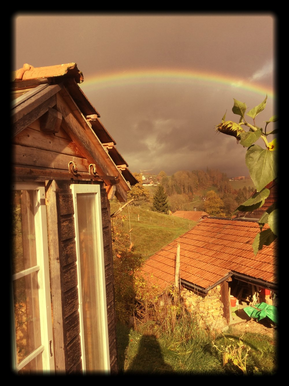 A_gardenhouse_a_sunflower_and_a_rainbow