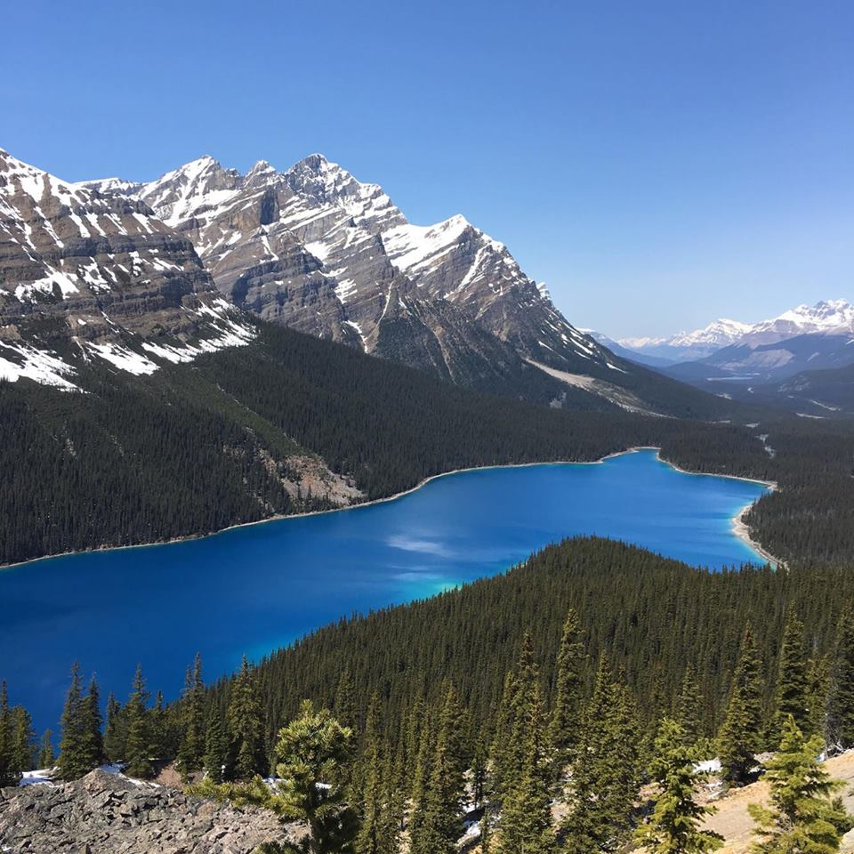 Absolutly stunning Peyto Lake