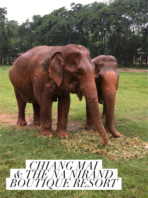 A guide to Chiang Mai, Thailand!