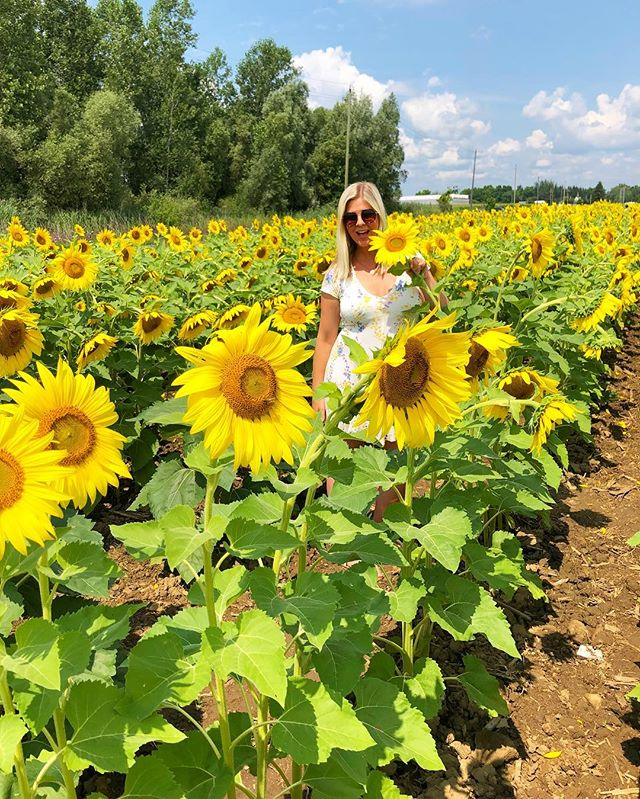 Just add sunshine 🌻 #BogleSeeds #discoverontario #myontario #hamont #sunflowers #summerlovin #ontario_adventures