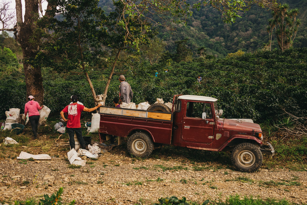 coffee pickers costa rica