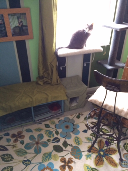 Instead of her food being out in the open, Tinsel has a protected food nook that doubles as seating space. She also has matching window perches and a scratching post. So spoiled!