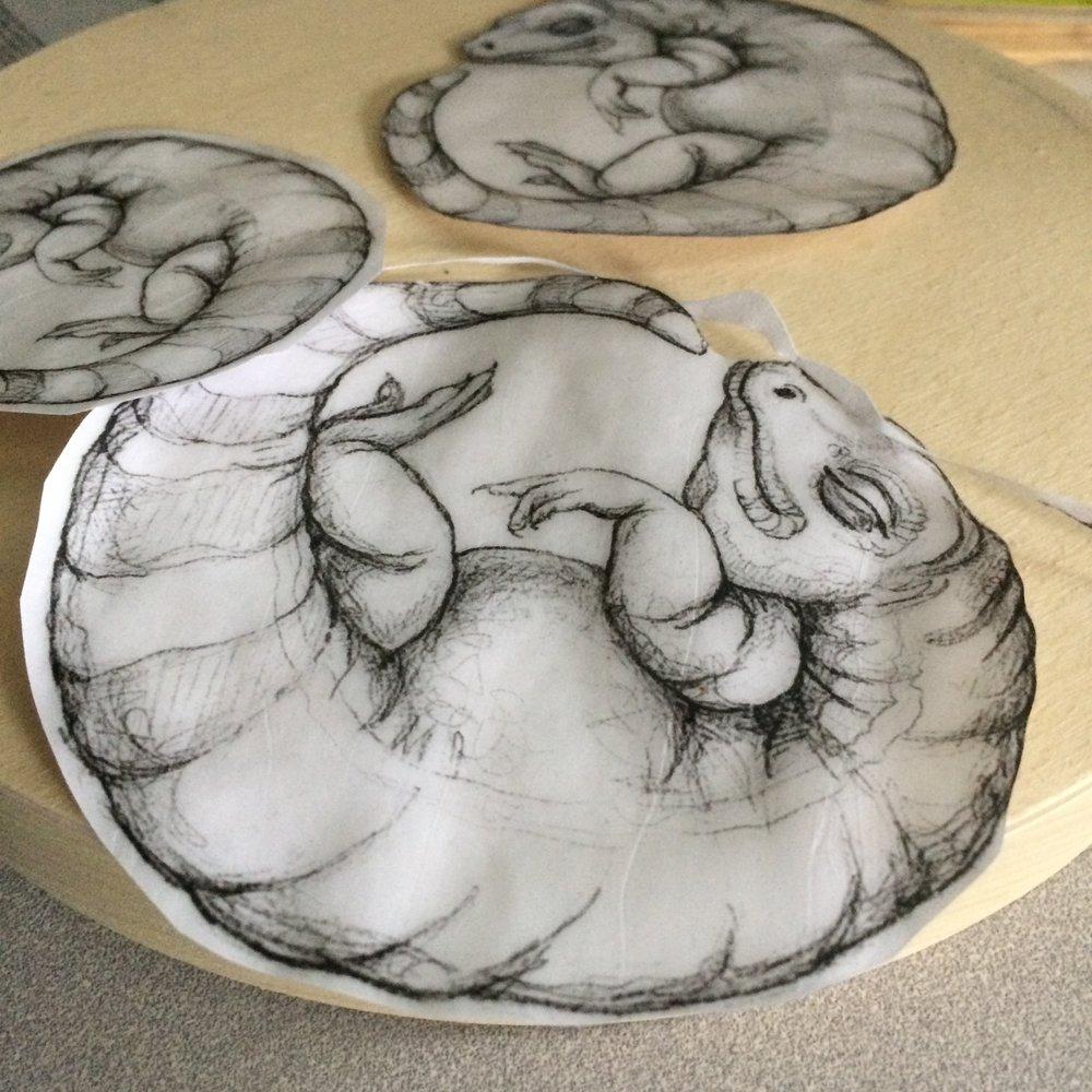 (A) Start with lizard gel transfer drawings.