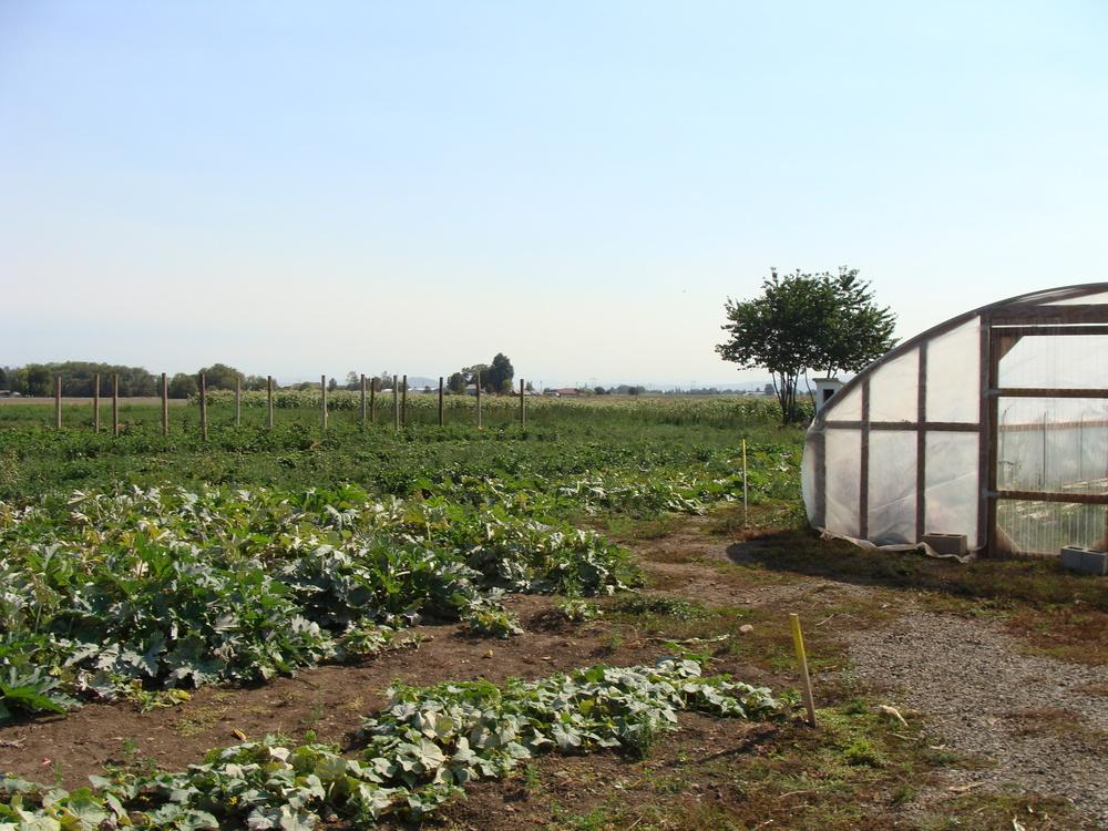 AHH_farmfield