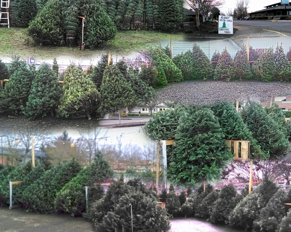 Collage of pictures from all four Christmas Tree Lot Locations.