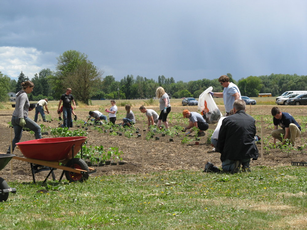 Volunteers at Work at AHH Farm which is run with the cooperation of Linn-Benton Food Share