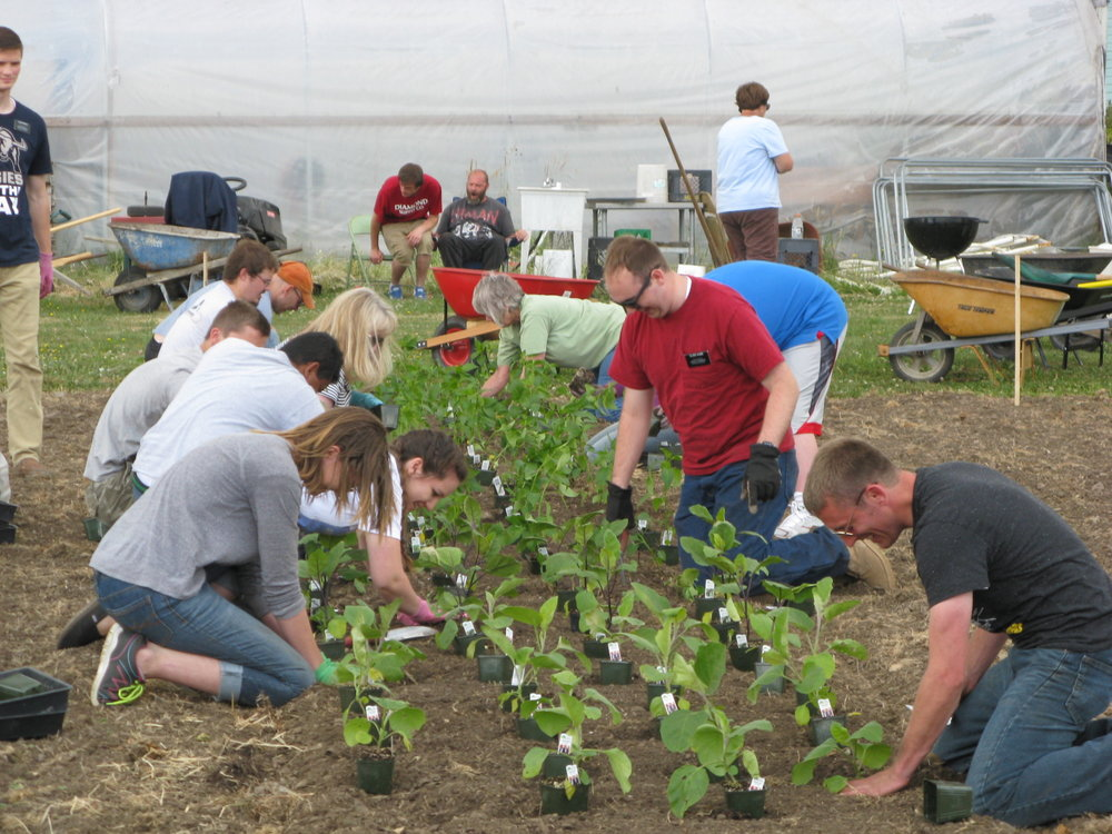 Volunteers from Linn-Benton Food Share at the Albany Helping Hands farm.