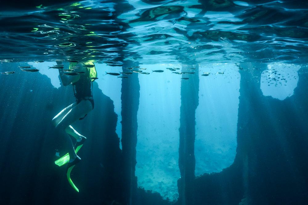 The Next Generation of Marine Biologist -