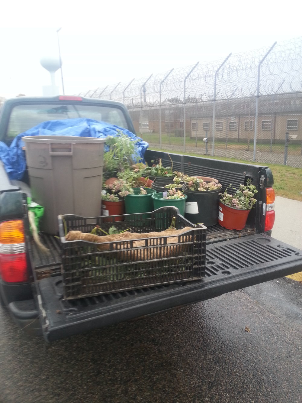 A truckload of strawberries, sedum and other donated perennials heading into a prison yard south of Boston.
