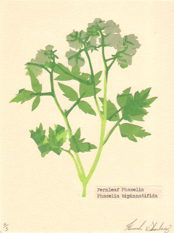 Fernleaf reduction print pressed flower by Hannah Skoonberg