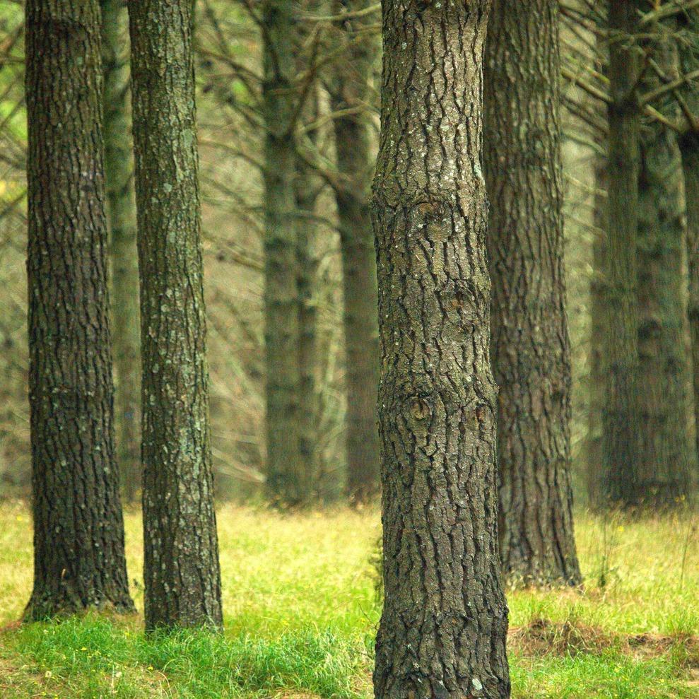 tree_rows1_small.jpg