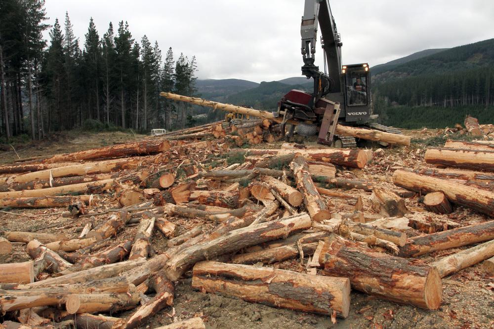 fuel wood.JPG