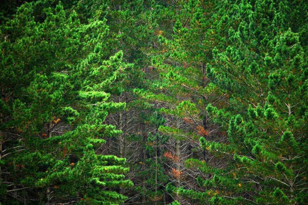 trees3_smaller.jpg