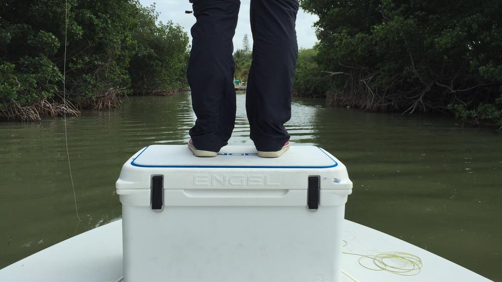 fishing-the-mangroves.jpg