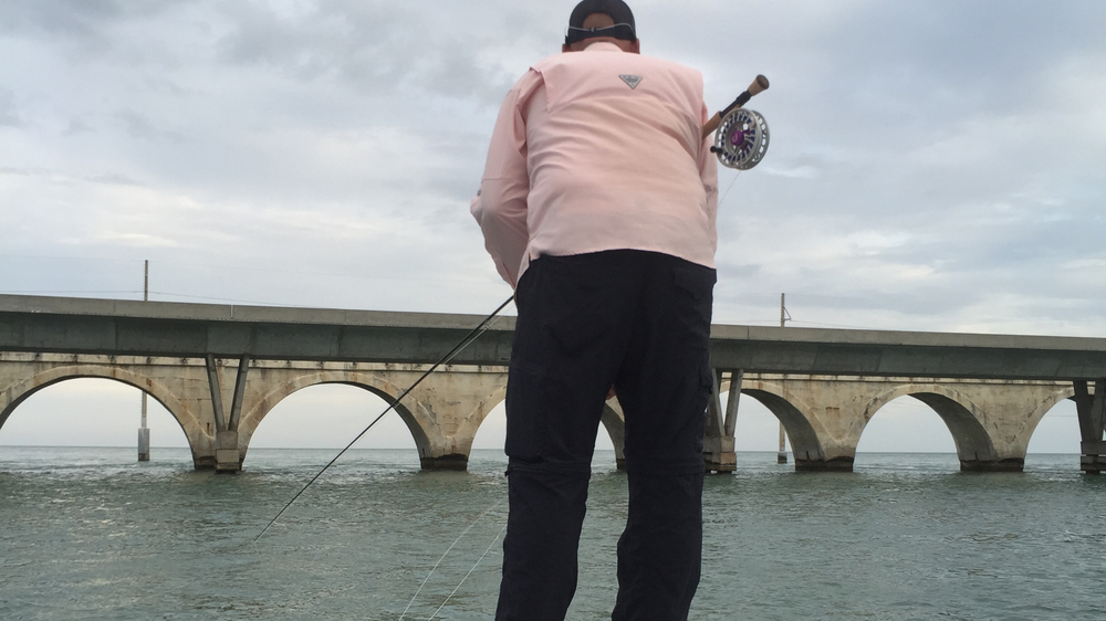 tarpon-under-the-bridge.jpg