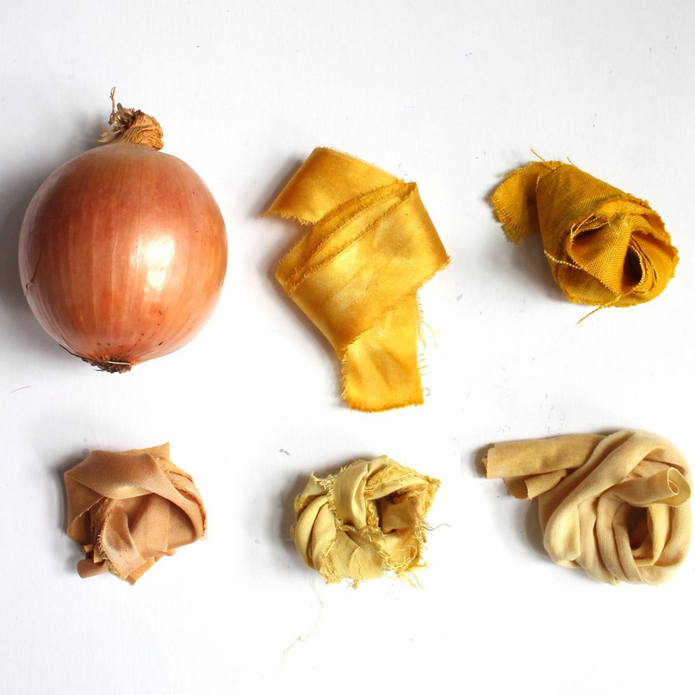 Onion   The skins of an onion make varying shades of yellow and gold.