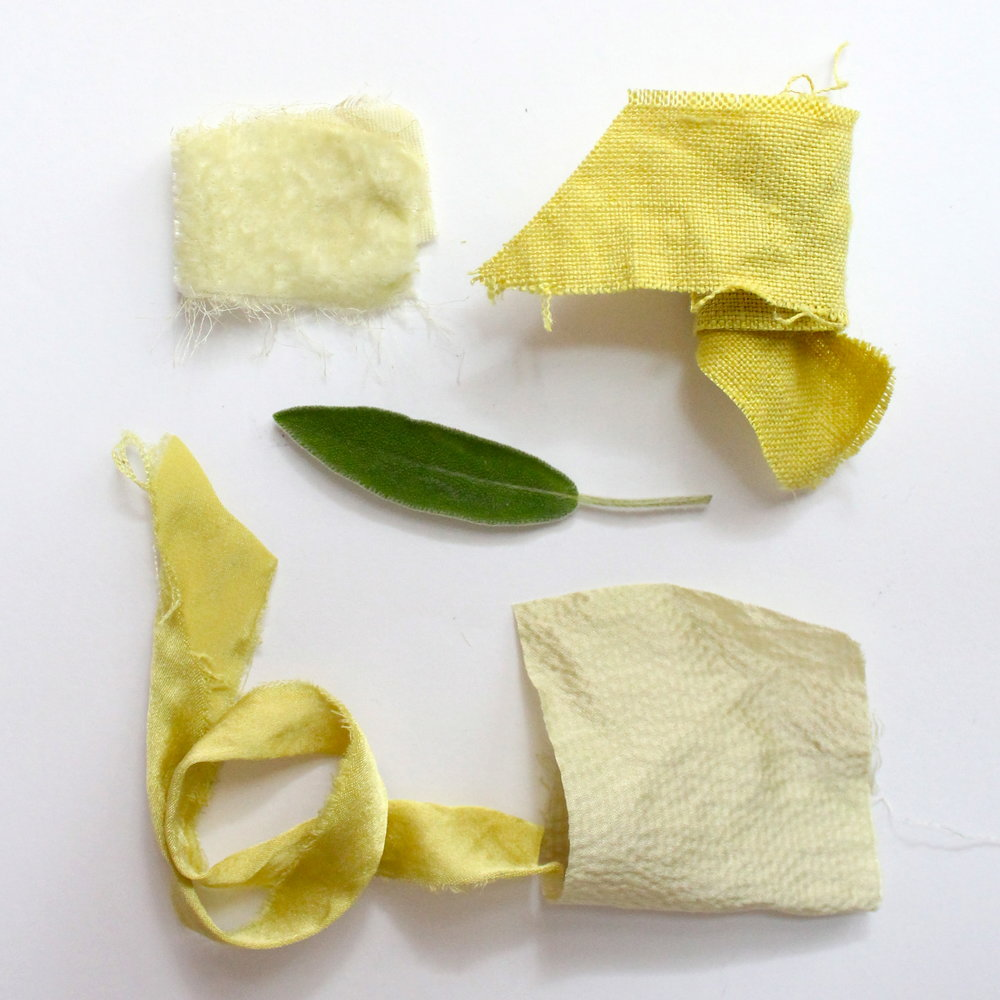 Sage   Sage leaves create an electric green color or a light yellow-green depending on the fabric.