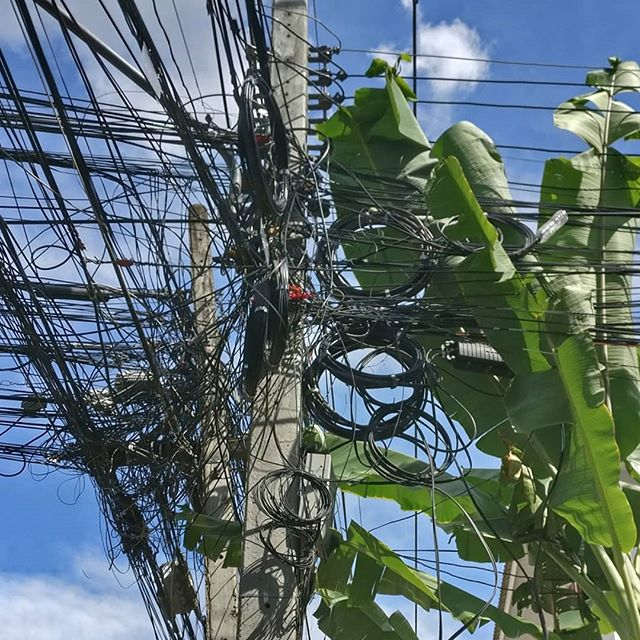 Plant Power? 🌴🔌🤷‍♀️ #thailand #palmtrees