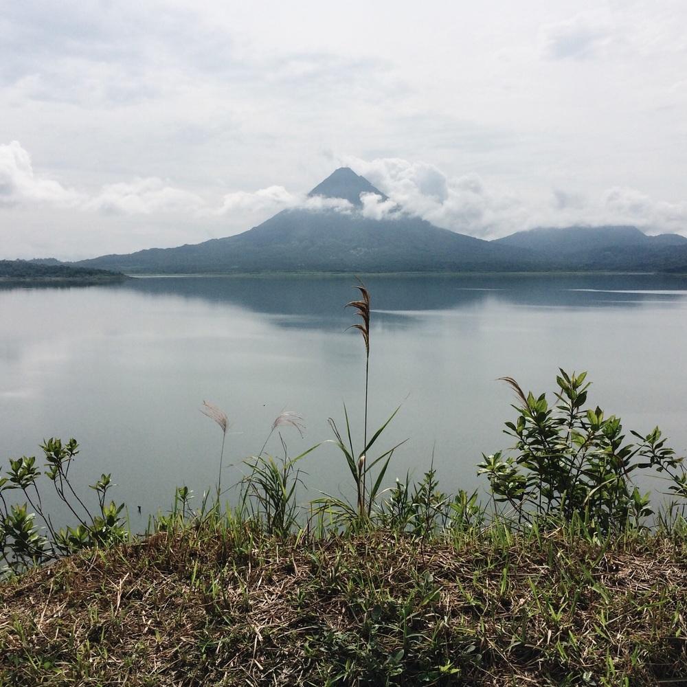 Ein hohes Pflänzchen (im Hintergrund der Vulkan Arenal).