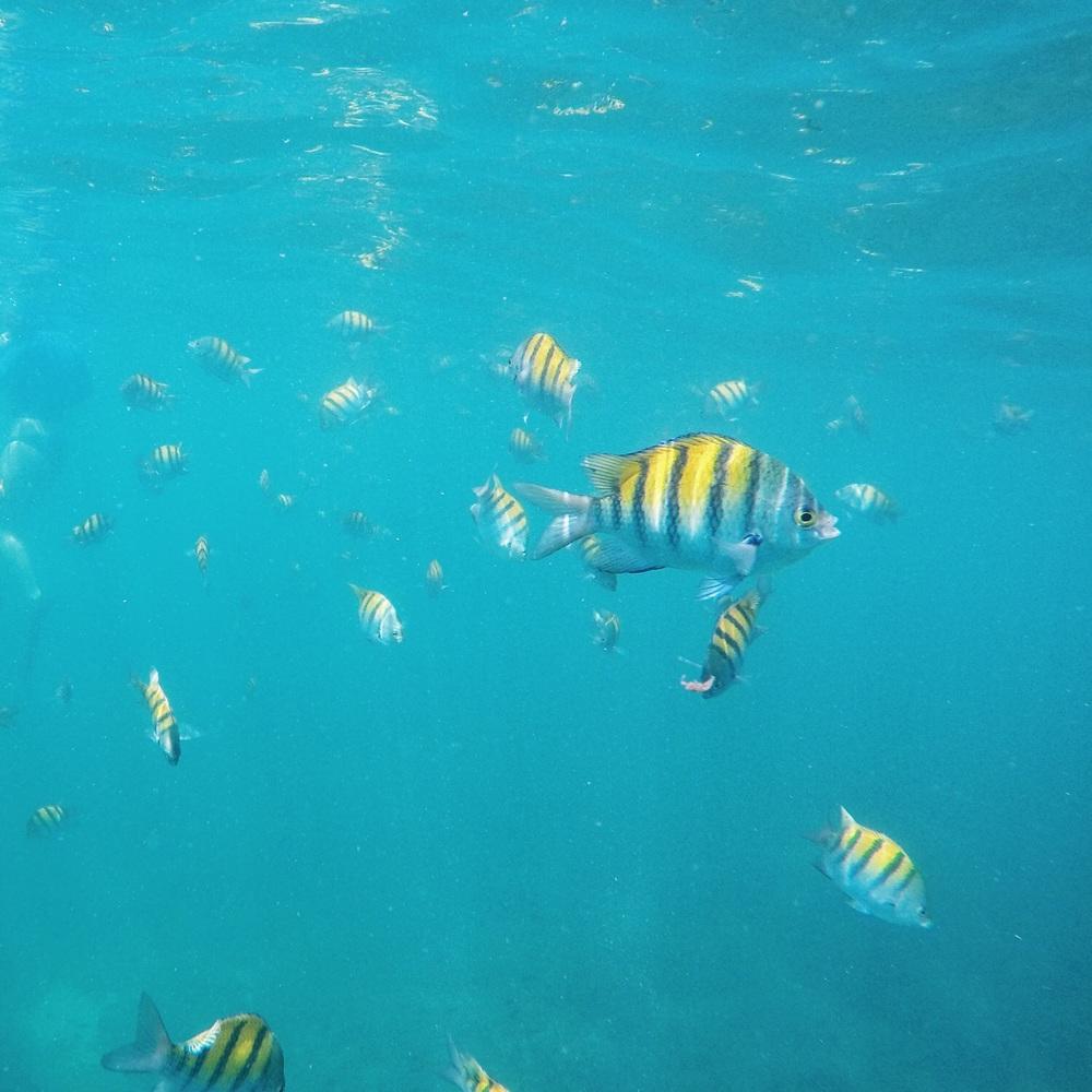 Viele bunte Fische.