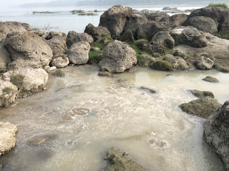 River contamination endangering aquatic life.