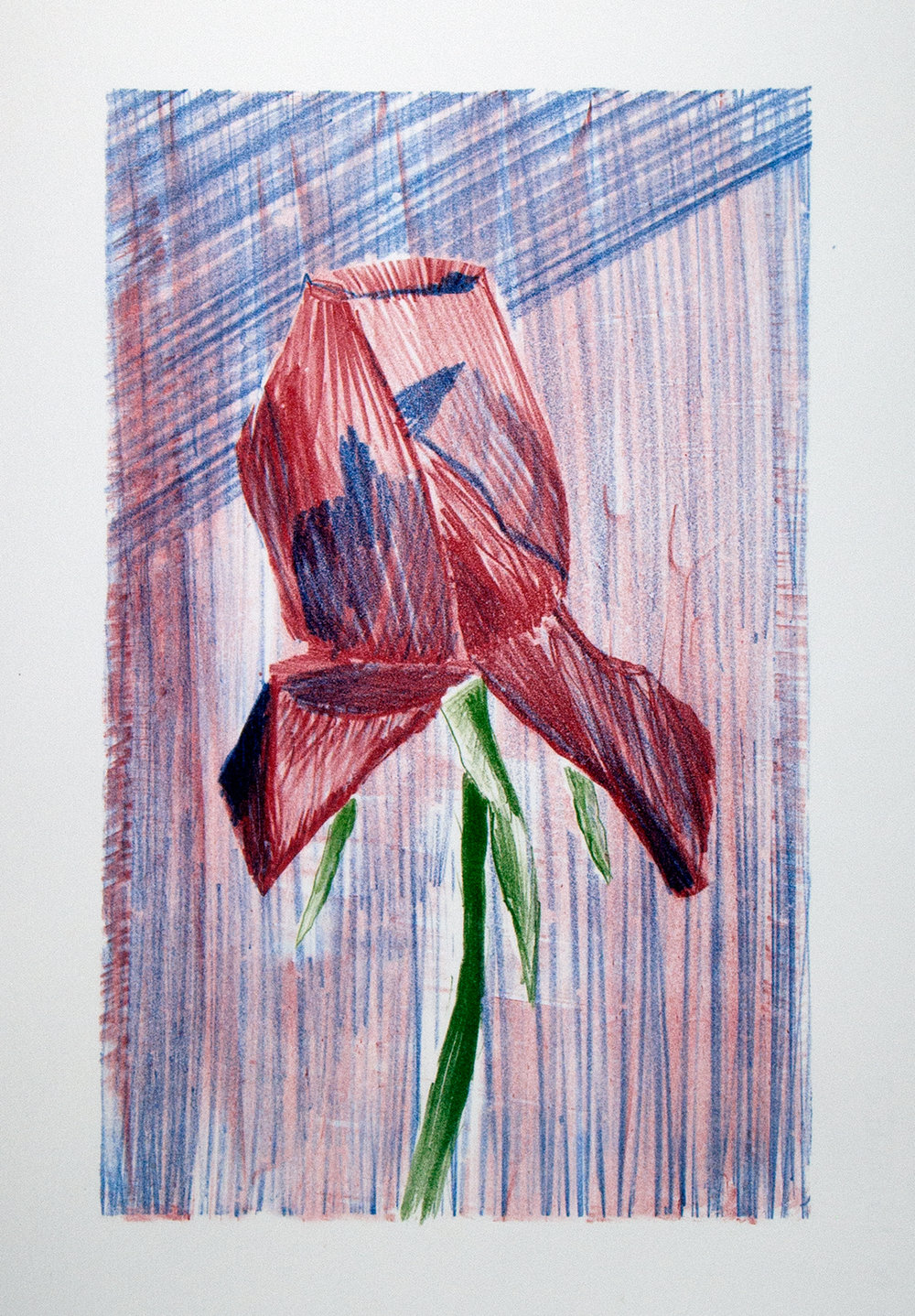 'Rose' from the  portfolio 'Alle Dinghe'  containing 6 lithographs