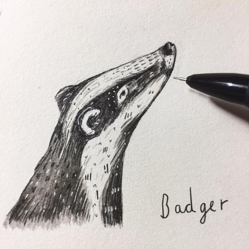DAY 26 // BADGER