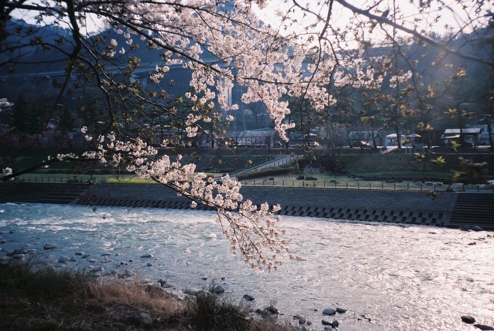 從諏訪峽大橋旁往下走到利根川溪流邊,跟著水波的移動方向一起前進。沿途種植許多花草樹木,春天櫻花、夏天綠意、秋天紅葉、冬天枯枝,四季都有著不同的面貌,是當地居民最愛前來散步的地方。