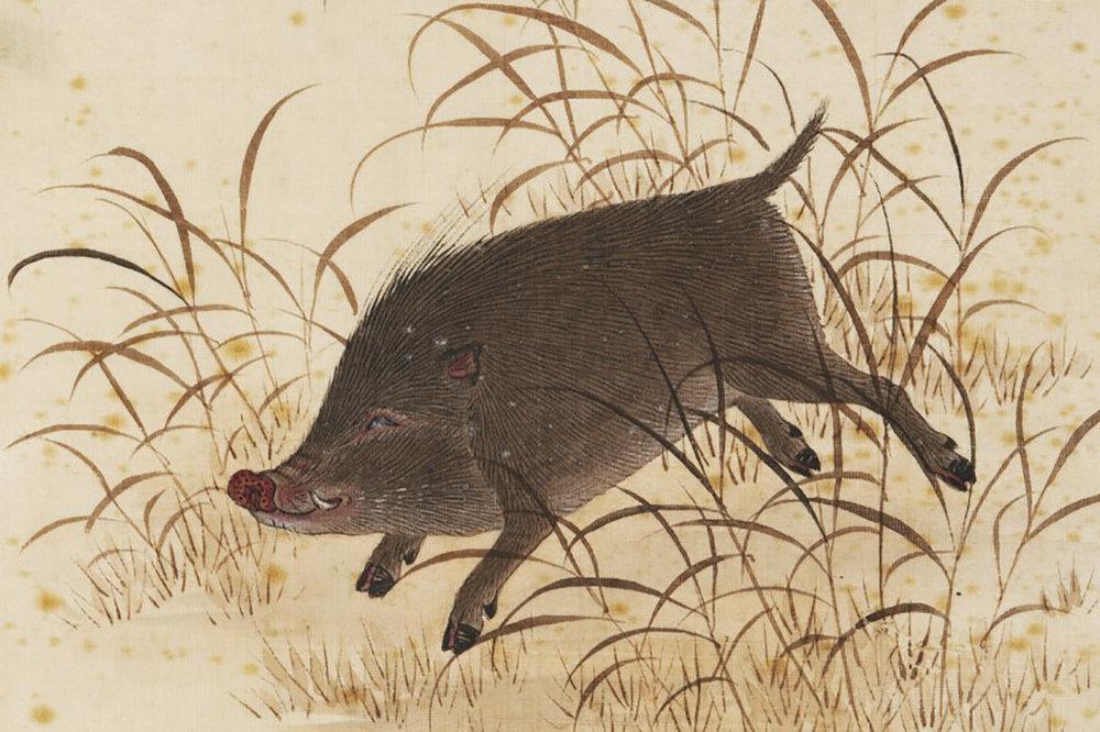 江戶時代畫家川原慶賀繪製的野豬。