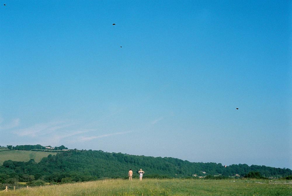 Fforest-248.jpg