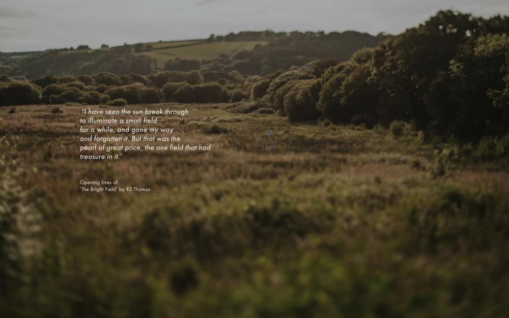 fforest nature writing.jpeg