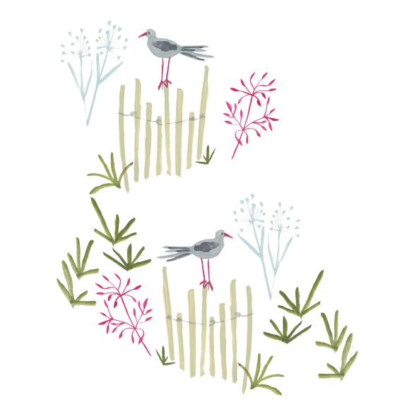 costal-birds.jpg