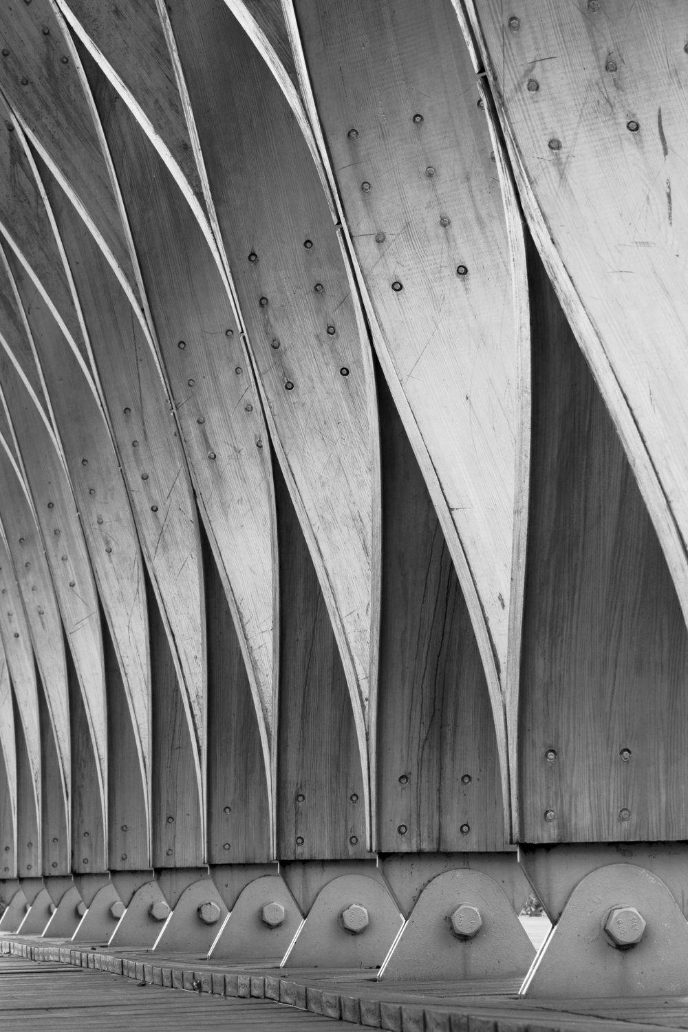 Honeycomb curves black and white - FINAL.jpg