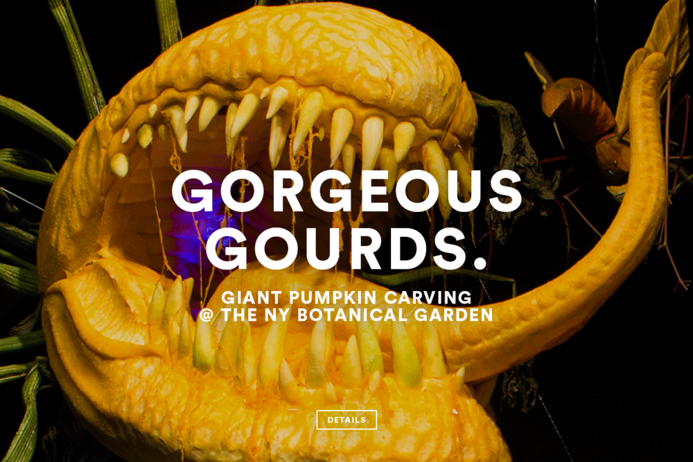 TPNY_CS_Gourds.png